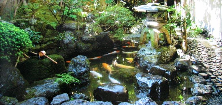 Le plaisir du jardin jardin japonais - Plantes pour jardin japonais ...